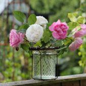 Vase med Roser