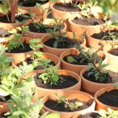 Småplanter