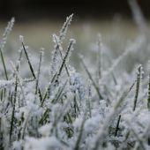 Frost på græs