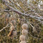 Fugle fodres