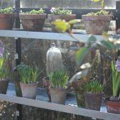 Blomsterpotter på zinkhylder