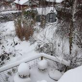 Sne kolonihave