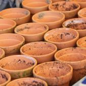 Rødlerspotter gjort klar til Dahlia