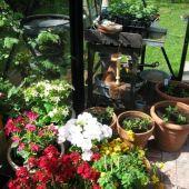 Blomster og planter til forspiring