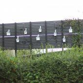 Fuglekasser og Klokkeranke bag solceller
