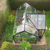 Tulipaner og drivhus