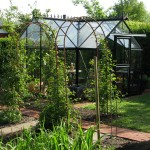 Rosenbuer og drivhus