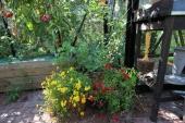 Blomster i drivhuset