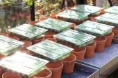 Småplanter fra Odenia