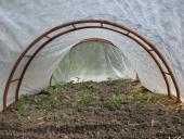 Forkultiveret planter under fiberdug
