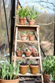 Plantetrappe