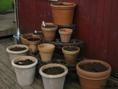 Plantetrappe med Hosta