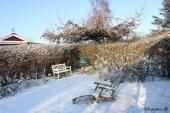 Snedækket baghave