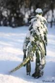Palmekål med sne